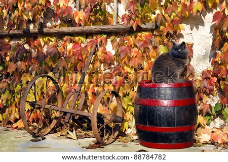 House with ivy on the walls and a cat sitting on a barrel in the scene in autumn - stock photo