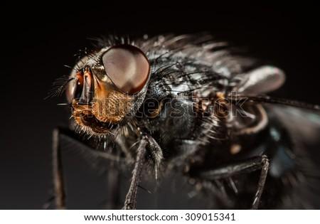 Housefly close-up on a gray background. - stock photo