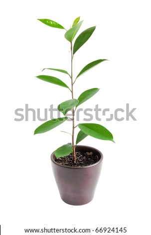 houseplant on a white background
