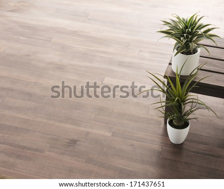 houseplant on wooden floor - stock photo