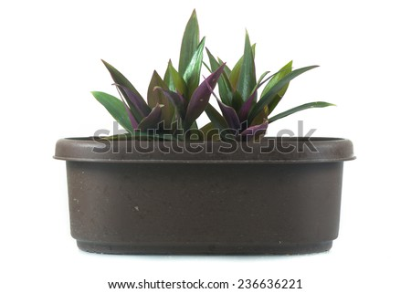 Houseplant - Plant a potted plant on a white background - stock photo