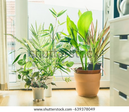 Houseplant Pots Arrangement At Window In Living Room Urban And Styling With Indoor Plants