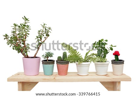 houseplants on a wooden bench, isolated on white