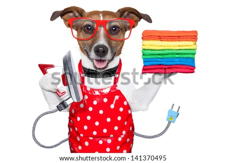 housewife dog ironing with a red apron and a stack of colorful towels - stock photo