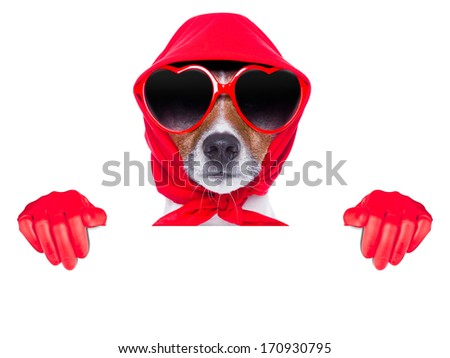 housewife dog with rubber gloves and a blue sponge - stock photo