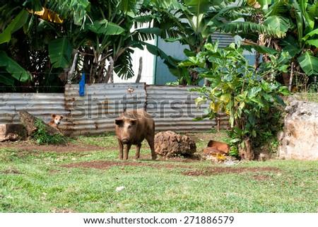 hovel, shanty, shack in Kingdom of Tonga, Polynesia - stock photo