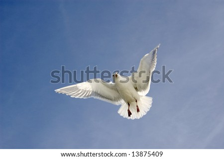 Hover - stock photo