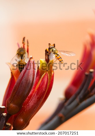 hoverfly on the flower of a cordyline plant