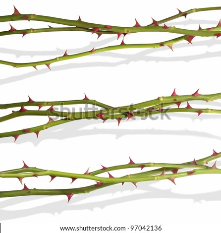 Hovering rose stems with clipping paths, for quick access without the shadows. The shadows have been photographed together, to appear real. All is isolated on white. - stock photo