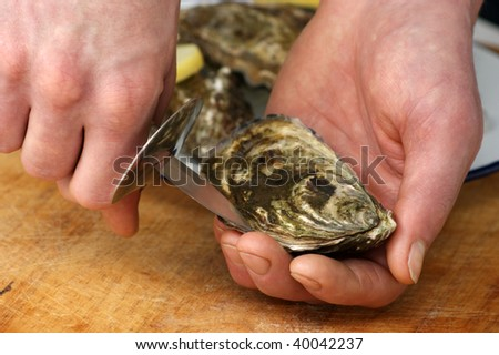 how to open one raw organic oyster