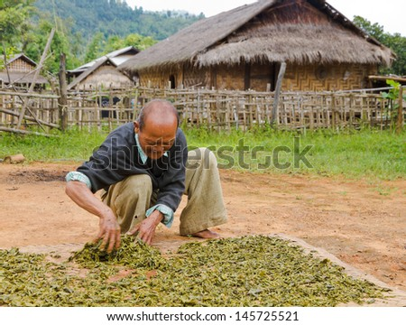 HPA AN, BURMA-OCT.  30: Unidentified old villager spreads green tea leafs to dry them on October 30, 2011 in Hpa An, Burma.  Green and Chinese tea is consumed in large quantities in Burma. - stock photo