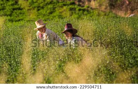 HUARAZ, PERU - CIRCA 2013: Two women work on the farm circa 2013 in Huaraz, Peru. - stock photo