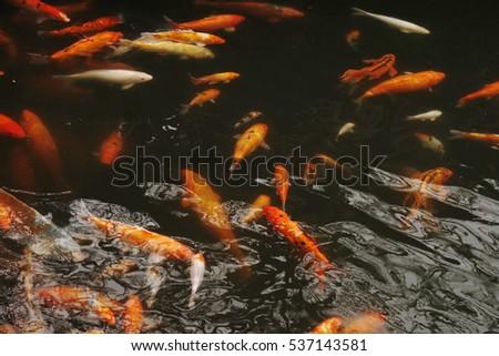 Carp Stock Photo 352970432 Shutterstock