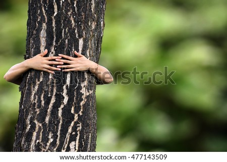 hug a tree love tree loved the world