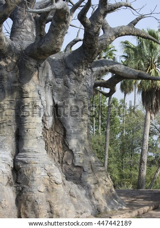 Huge African Baobab Tree close up view of half of the tree - stock photo