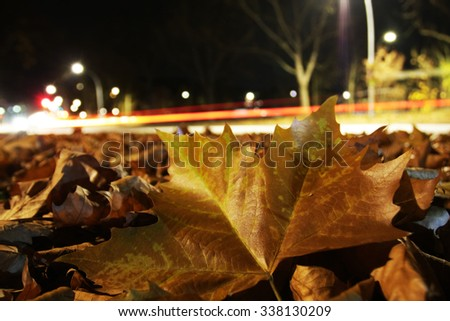 huge brown leaf beside road at night with car light trails