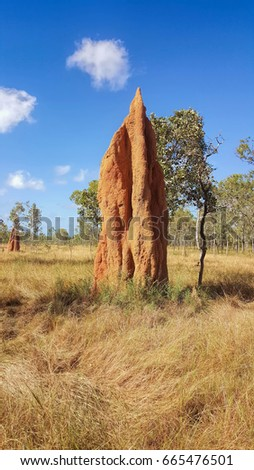 Huge Cathedral termite mound found in Cape York Australia