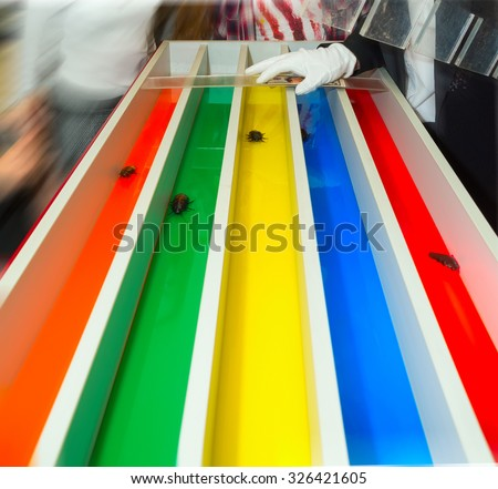 Huge cockroaches race run on color tracks. - stock photo