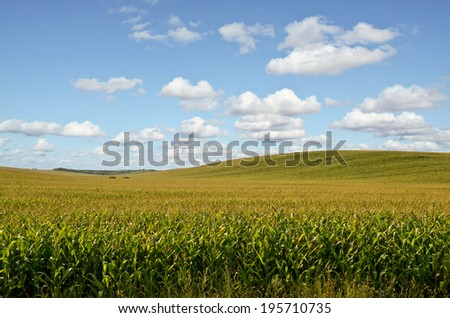 Huge Corn Field - stock photo