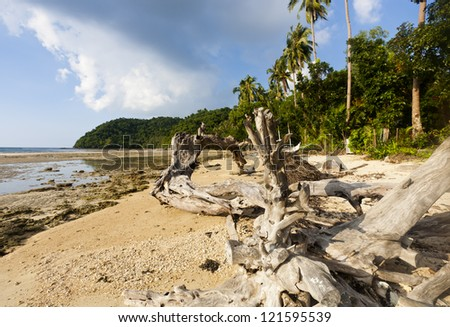 huge dead tree at the beach - stock photo
