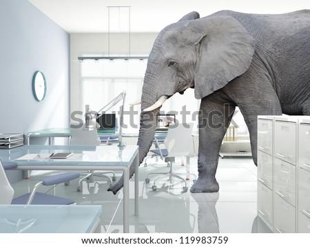 huge elephant walk in modern office - stock photo