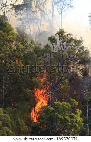 Huge flames roar up the side of a hill in the Australian bush - stock photo