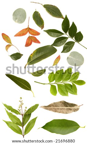 huge leaf collection - stock photo