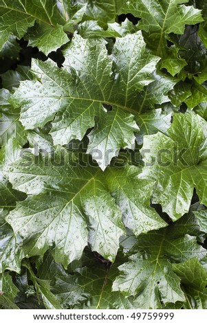 Huge leaves of plants with textures
