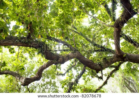 Huge limb of a tree in thick lush jungle - stock photo