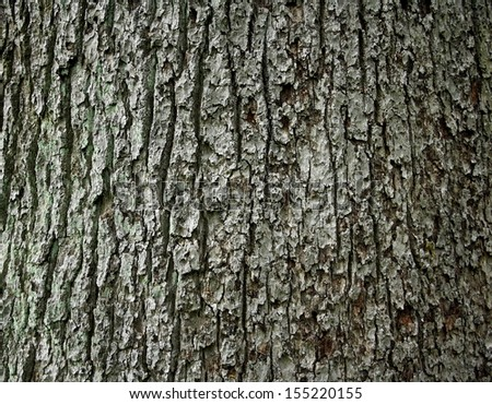 Huge oak bark as background, close up - stock photo