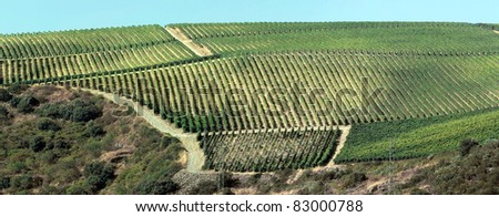 Huge panoramic view of the world famous vineyards of Porto wine. - stock photo