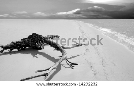 Huge piece of driftwood on shore of empty beach with storm clouds on horizon - stock photo