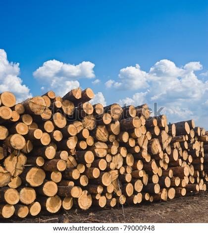 huge pile of pine tree barrels - stock photo