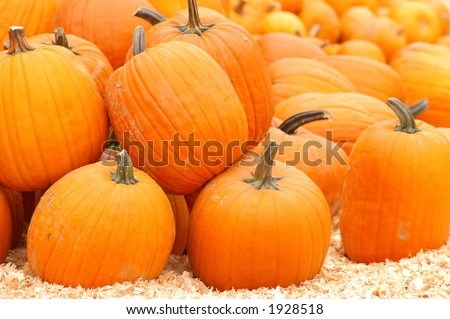 huge pile of pumpkins