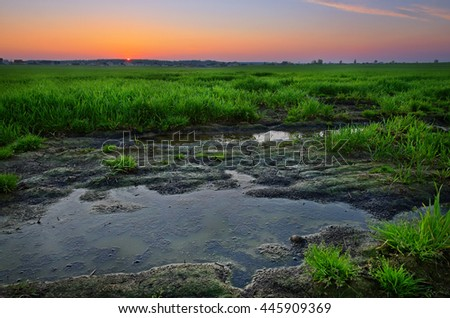 huge puddle in swamps on sunset - stock photo