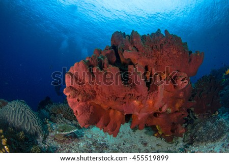 Huge red sponge and silhouettes of a divers behind. Underwater view. Beautiful reefs of Indonesia, with schooling fishes, soft and hard corals and sponges. Colors of the ocean, Nusa Penida. - stock photo