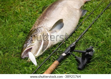 Huge salmon - trout caught on spinning - stock photo