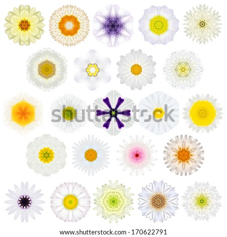 Huge Selection of Various Colorful  Kaleidoscopic Mandala Flowers Isolated on White. Big Collection of flowers in Concentric shape pattern. Rose Flowers in White, Yellow, Pink and Purple colors. - stock photo