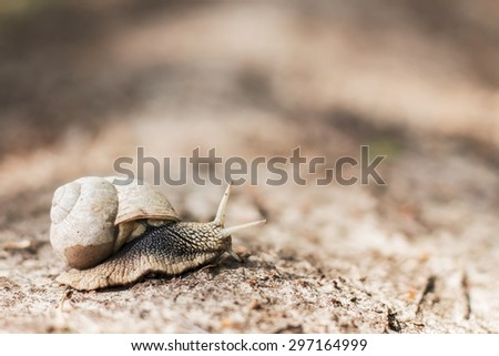 Huge snail. Background with selective focus - stock photo