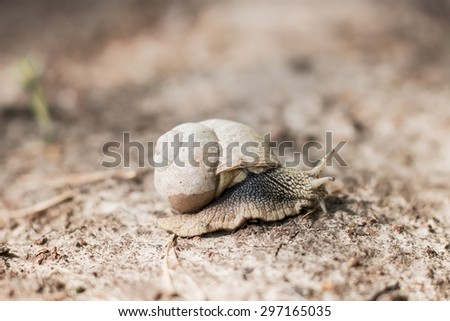 Huge snail with shell. Background with selective focus - stock photo