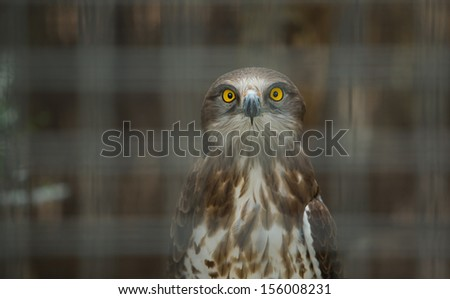 Huge Snake Eagle standing on a fence, Cordoba Zoo, Spain - stock photo
