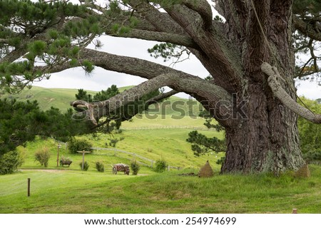 Huge Tree at Hobbiton Movie set, Matamata, North Island, New Zealand - stock photo