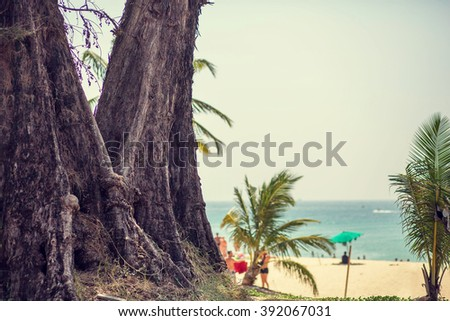 Huge tree in beautiful Karon beach in Phuket, Thailand. Image with selective focus and toning - stock photo