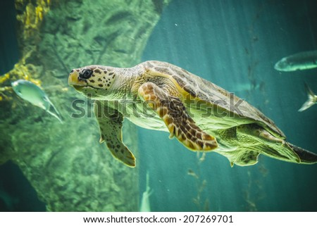 huge turtle swimming under the sea - stock photo