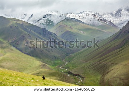 Huge yak running down the hill, Tien Shan mountains, Kyrgyzstan - stock photo