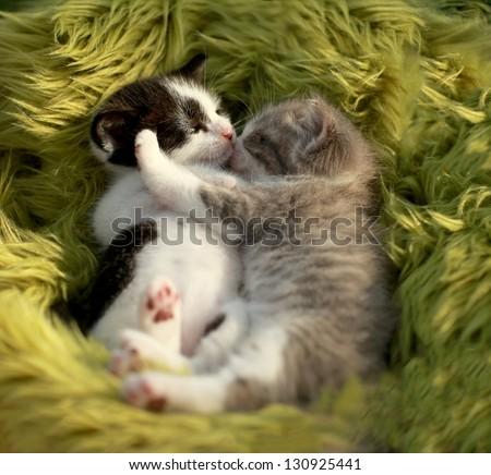 Hugging Little Kittens Outdoors in Natural Light - stock photo