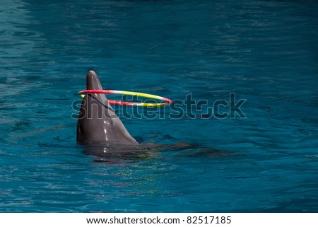 Hula Hoop/ dolphin - stock photo