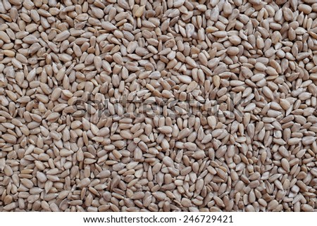 Hulled sunflower seed hearts as an abstract background texture - stock photo