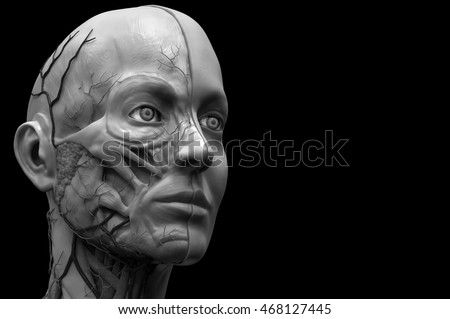 Human anatomy background , anatomy of the head for a female , realistic 3D rendering in black and white