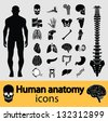 Human anatomy black & white icon set. Vector version also available in my portfolio. - stock photo